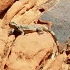Spotted on today's Red Rock hike in the the Calico Hills. Biologists, please identify.