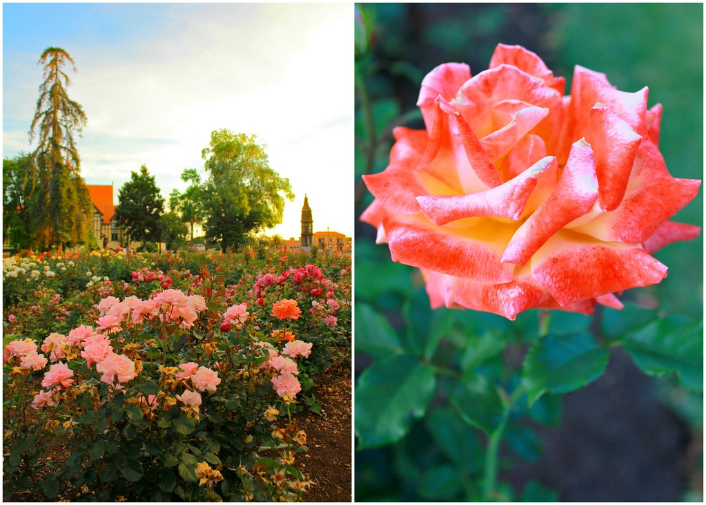 rotorua-government-garden-new-zealand-sunset