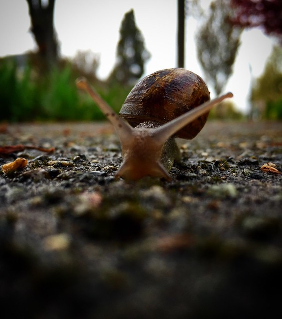 Snail totem synKringnicity 2