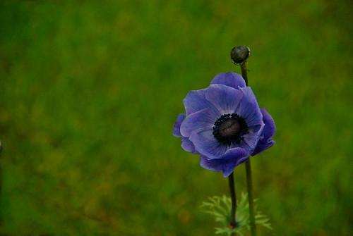 A Flower in Co. Wexford Ireland