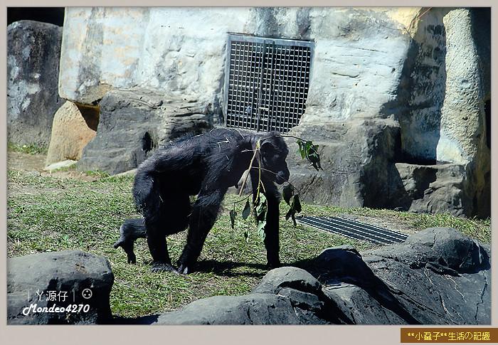 木柵動物園(圓仔)49