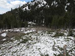 Avalanche debris path