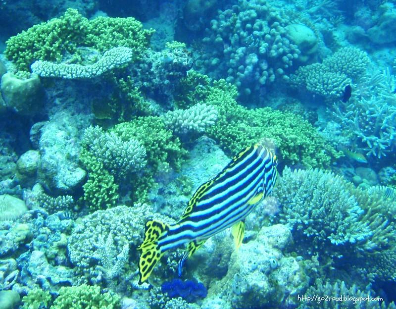 Сноркинг на Мальдивах хорош