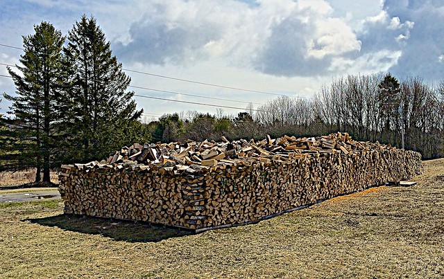 Teddy's woodpile