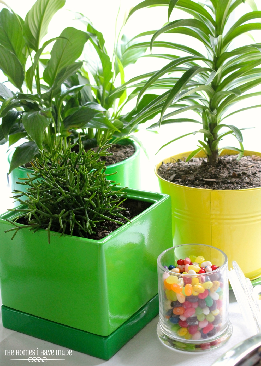 Green Planters-009