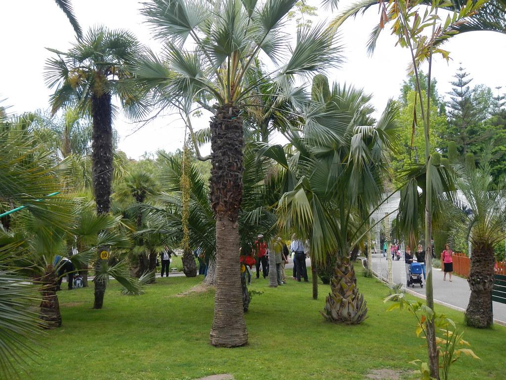 Le forum des fous de palmiers ag 2014 nice menton 25 for Garage les palmiers nice