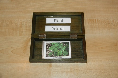 Plant and Animal Sorting (Photo from Counting Coconuts)