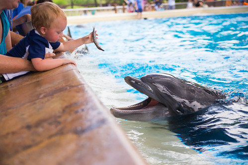 Feeding Dolphin at SeaWorld