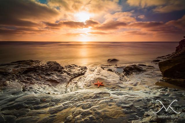 La jolla star fish flickr photo sharing for La jolla fishing
