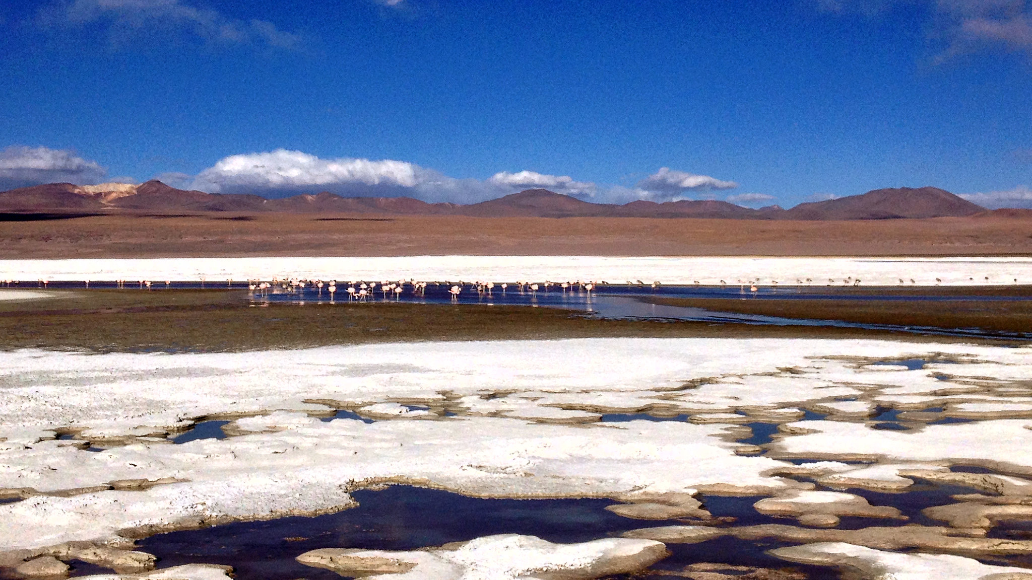 Laguna Colorada, Salar de Uyuni tour, Bolivia, May 2014