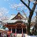 光のどけき春の日に - Cherry blossom, old temple, and blue sky -