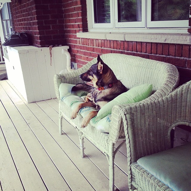 Apparently Miss Bella is to fancy for the dog bed on the porch.