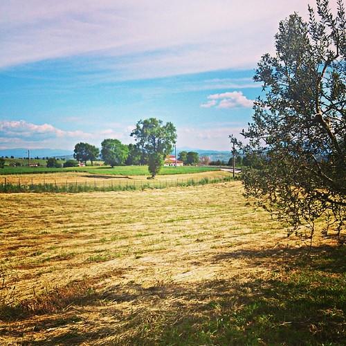 Relax  #ig_avellino #igerscampania #igersitalia #relax #direzioneitalia #terredellupo #italia #latitudinesud