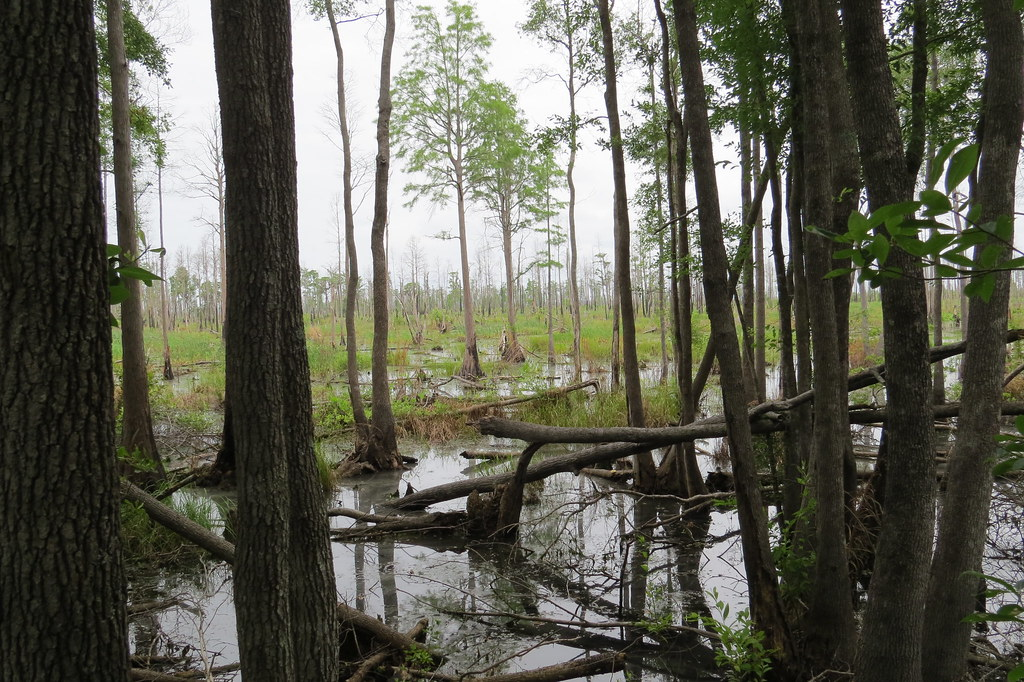 okefenokee swamp ap essay Text/author important rhetorical strategies used  how those strategies connect to purpose/effect sample ap theses for the okefenokee swamp prompt.