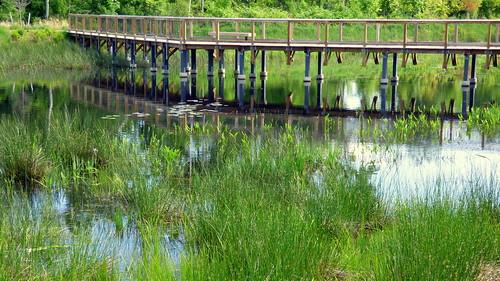 bridge cambridge reflection wildlife massachusetts alewife jaym cambridgemassachusetts alewifebrookreservation alewifebrook mahler9 alewifebrookwildlifereservation andantecomodofotos