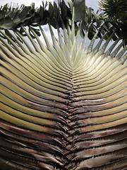 Palm at Casa Blanca