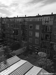 Backyard Eerste van Swindenstraat Amsterdam
