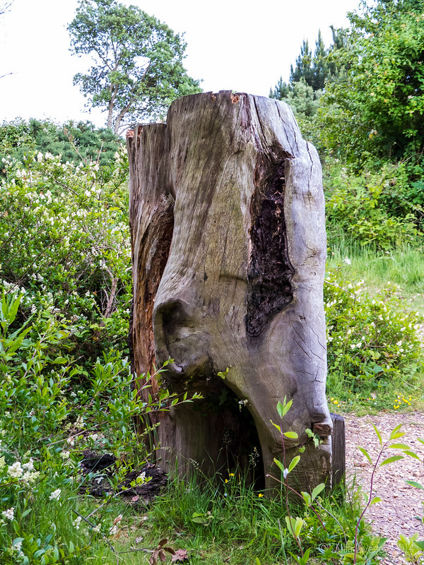 This old stump has a face