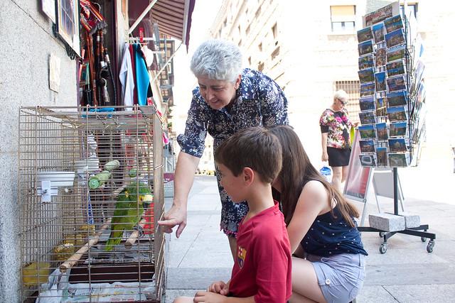 Toledo Spain pet store