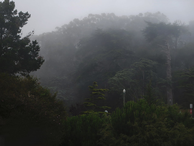 Foggy Golden Gate Park, San Francisco (2014)