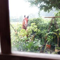 ベトナムカフェ。窓の外には馬の首。
