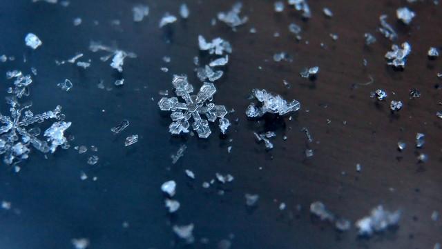 1_snowflakes-.jpg