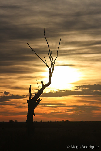 sun tree argentina sunrise la pampa
