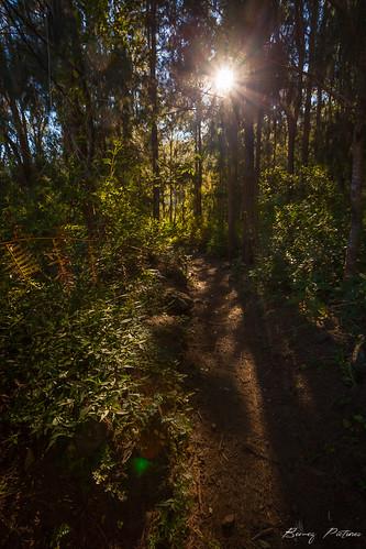 sunset canon eos soleil landscapes rando cirque réunion forêt lumières lever rayons flore mafate 5dii bemezpictures