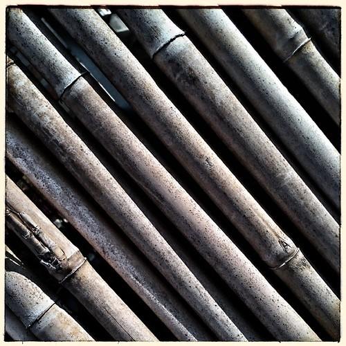 Bamboo. #jhongsingvillage #taiwan #nantou #bamboo #snapseed
