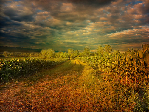 light sky italy field clouds landscape evening countryside italia path country fourseasons lane countrylane friuli makelovenotwar fagagna elitegroup feagne daarklands co9rn onlymyfavorite sowelltaken