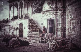 Rajasthan . India