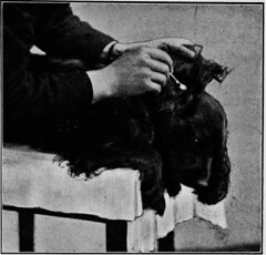 "Image from page 232 of ""Canine distemper, its complications, sequelae, and treatment"" (1922)"