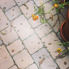 First raindrops in months. Lasted 30 seconds! #paloalto #siliconvalley #california #rain #drought