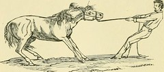 "Image from page 111 of ""The standard horse book, comprising the taming, controlling and education of unbroken and vicious horses"" (1895)"
