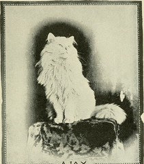 "Image from page 102 of ""The Angora cat; how to breed train and keep it;"" (1898)"