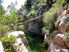 Remontée finale du canyon avec la grande vasque à l'arbre mort