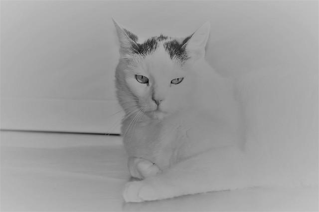 Happy Caturday :)
