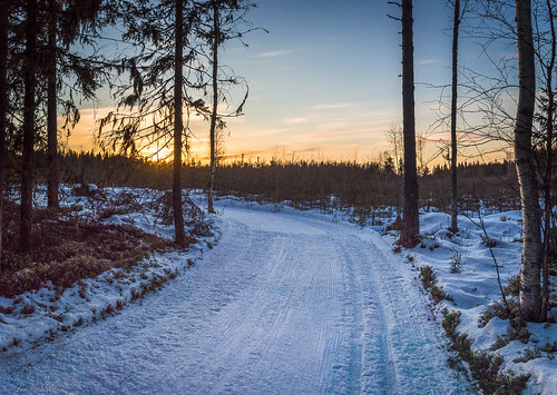 nordic skiing forest sunset bend lasikangas raahe finland winter snow trees outdoor activity
