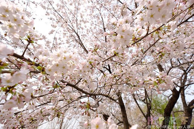 首爾林seoul forest (2)