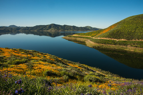 diamond valley super bloom orange poppies wildflowers flowers reservoir 2017