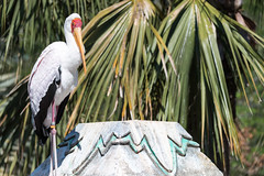 Stork on a Monument