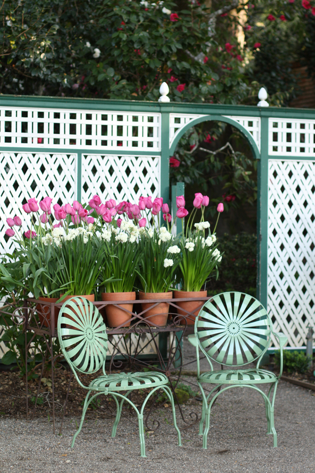 tulips and chairs