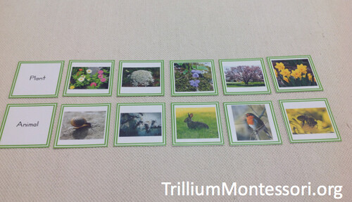 Spring Plant and Animal Sorting (Photo from Trillium Montessori)