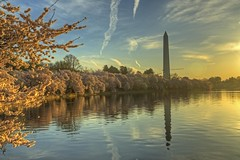 Washington Monument & Cherry Blossoms