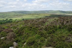 Back Forest to The Roaches (487)