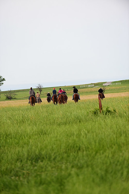 Gathering Cattle May 14