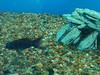 tropical-fish-coral-custom-tank-aquarium-sarasota-fl-11