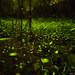 fireflies by wrc213