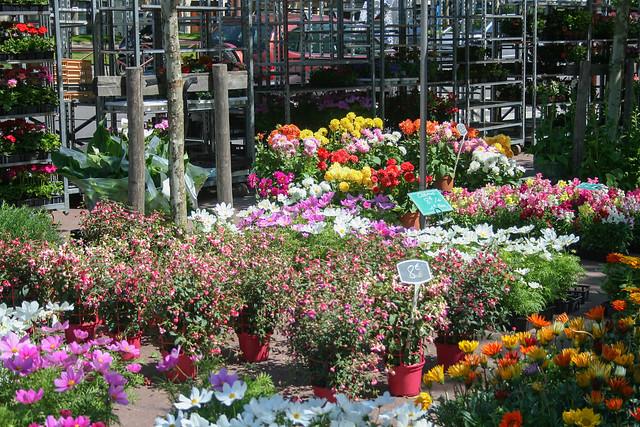 Flowers - Versailles