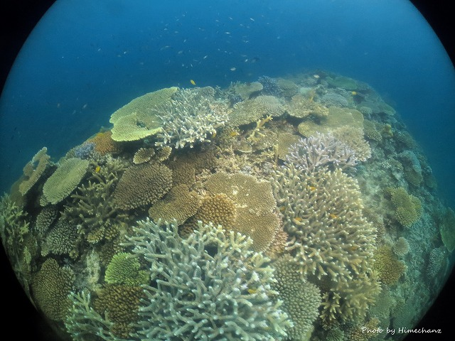 名蔵の珊瑚キレイゾーン♪
